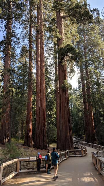 Sequoia Giants