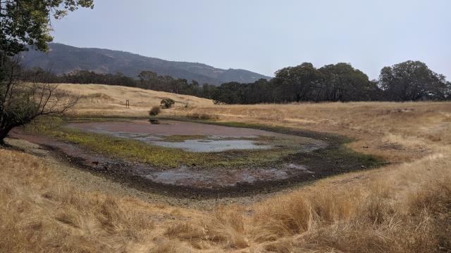 Damselfly Pond