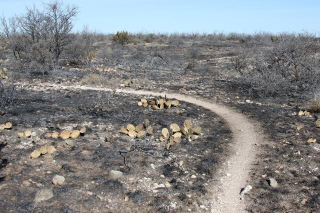 Some of the burned area