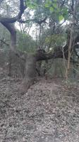 michael's tree