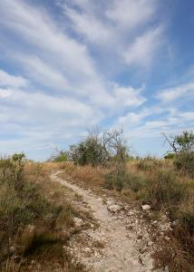 A Portion of the Lanky Lackey Trail