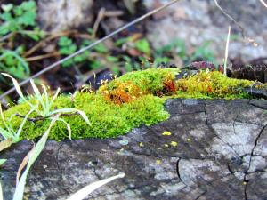 moss on stump