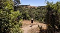 Redwood Hill
