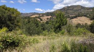 Hillside Trail View