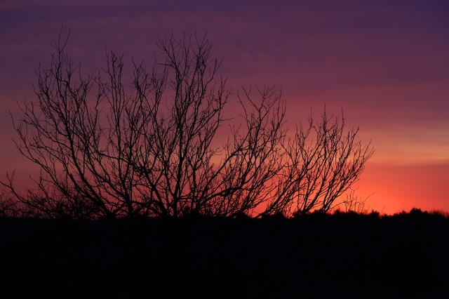 Sunrise at Burkett Park