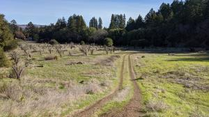 Orchard and Camp Via