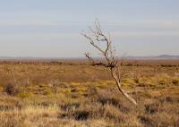A Lone Tree