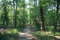 A View Of The Trail