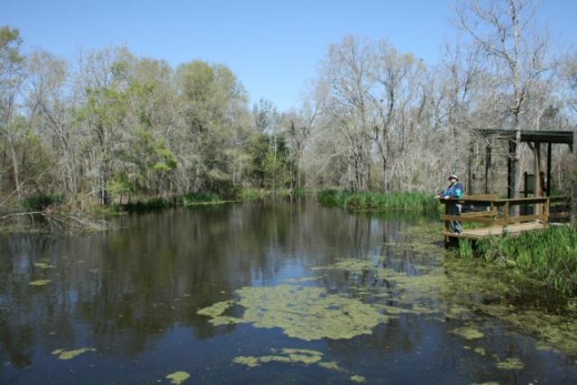 Scenic Ponds