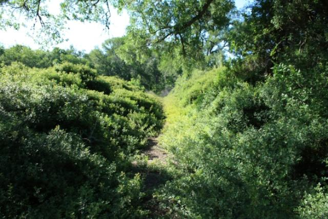Trail Overgrown