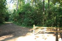 Forest Trailhead