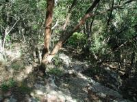 The initial few hundred feet of the trail descends down a rocky slope to the creek bed.