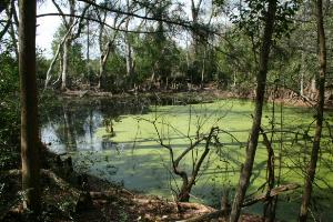 Green Algae Pond
