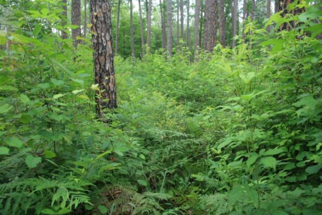 Overgrown Foliage