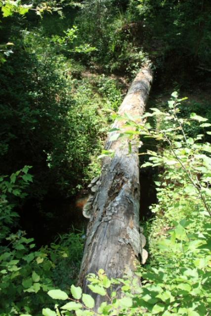 Log Crossings