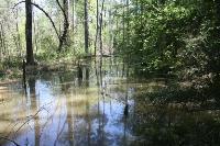 Alligator Branch