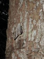 White tail deer were not the only wildlife noted.  This moth was one of many on a single tree.