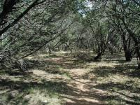 Cedar and oak trees predominate in the park and often completely cover the trail.
