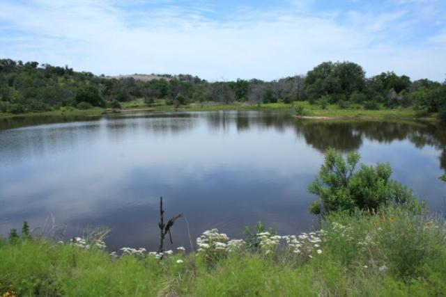 Moss lake texas
