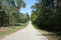 Road Walk (Evelyn Lane)
