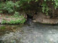 Comal Springs is the largest spring in Texas, and the southwest.