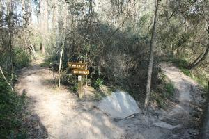 Branching Mountain Bike Trails