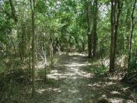 A view along the well shaded trail.  Note the few Palmettos to the right.