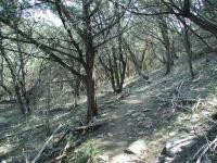 Much of the trail is heavily wooded with Junipers, Oaks and other trees.