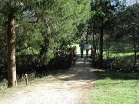 Blunn Creek Greenbelt is a popular spot for walks through the neighborhood.