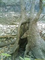An Interesting Hollow Tree