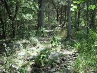 Most of the trail is flat and follows the creek.  Side trails that ascend from the creeks get a little rocky.