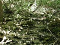 Following the less developed trails leads one to some nice spots like this feeder stream.