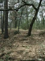 The Lost Pines are one of the most interesting hiking areas in Central Texas.