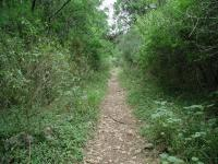 A few segments of the trail are somewhat narrow, but none of it is overgrown.