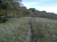 The portion of the trail that straddles the hill/prairie boundary is a bit more overgrown, but still easy on the legs.