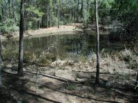 The numerous ponds that dot the landscape are favorite Houston Toad breeding grounds.