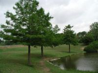 Planted along the pond's shore are several Cypress trees.
