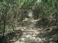 Dense thickets of Cedar provide shade along the trail farther uphill.
