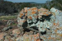 Lichen covered Granite