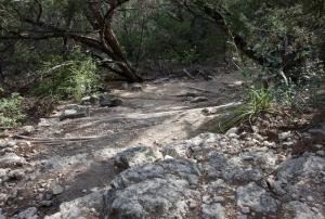 Descending Falls Trail