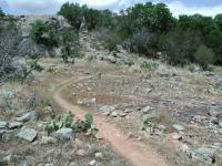Cacti and Rocks