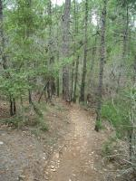 Most of the trail consists of east terrain, though a few spots are mildly steep.
