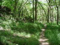 The red trail provides heavy tree cover, but also heavy grass coverage of the trail.  Often the trail was even more overgrown that shown here.