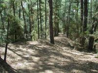 The trails through the Pine forest provide some unique hiking opportunities in the Hillcountry.