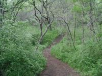 As the trail lowered to the Colorado River the extra moisture fed a thick carpet of greenery.