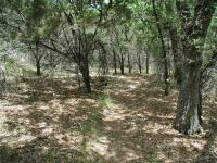 There is some shade during the hike such as this section, but open skies are more of the norm.  So wear your sunscreen!