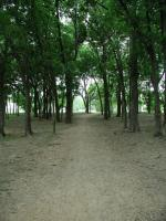The dense grove of trees provides ample shade on sunny, hot days.