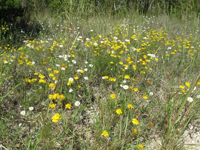 Wildflowers in October
