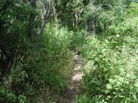 Much of the trail was overgrown on our visit, which made the going a bit slower than anticipated.
