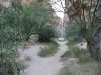 The Rio Grande riverbank includes sandy soils and lots of vegetation.